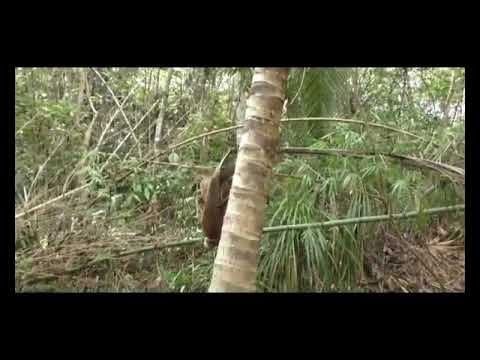 Kristen Bell Gets Naked and Afraid from YouTube · Duration:  5 minutes 18 seconds