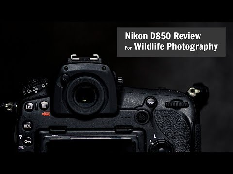 nikon-d850-for-wildlife-and-photography-|-review-one-year-later