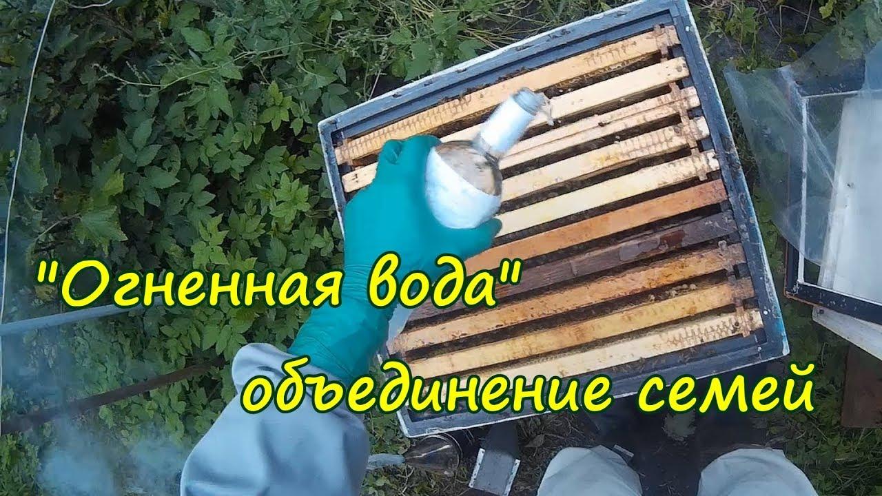 пчеловодство, объединение семей