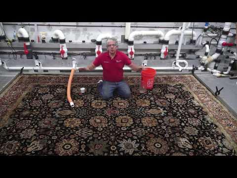Nobody clean Oriental rug the Way PetPeePee Clean. #petpeepee