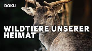 Wildtiere unserer Heimat - Tierdoku, Tierfilm, Dokumentarfilm, Doku, deutsch (*kostenlose Dokus*)