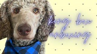 Kong dog toys: dog box review