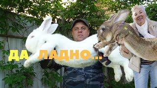 Нам врали о самом тяжёлом кролике в мире / Рекорды Гиннесса / Факты / События