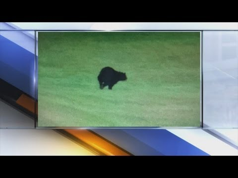 6pm: Black bear captured on Bath Township...
