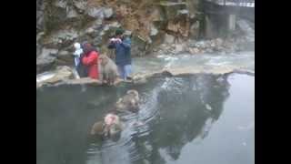 せら(サルーキ)のハウンドなお友達が林檎狩りにお越し下さいました♬ 林檎狩りの前に、渋温泉の地獄谷へ行ってきました。 わんこは車中でお留守番です^^