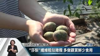 水果「莎梨」製即飲品 返鄉青農創商機【客家新聞20161116】