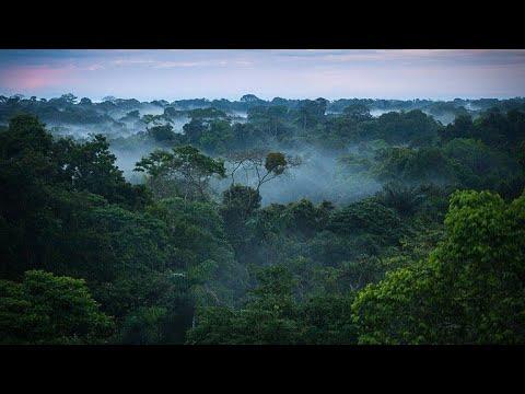 Download MAAJABU 15 YA MSITU WA AMAZON ''VOLDER''