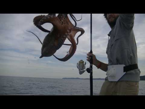 Crazy Italian Way To Catch An Octopus With A Barbie Doll And A Fishing Rod