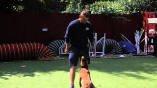 Royvon Dog Hotels And Training, Esher, Surrey