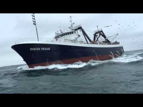 Fishing company of alaska funnydog tv for Fishing company of alaska