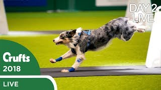 Day 2 Live Stream | Crufts 2018 thumbnail