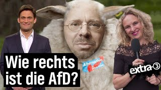 AfD-Erfolg in Brandenburg und Sachsen