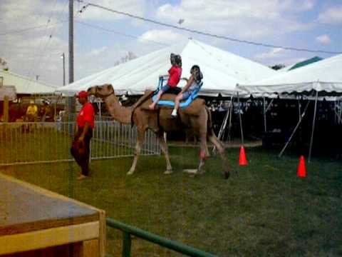 Call 815-600-6464 / Andreas Chicago Camel Guy!, Animal Rentals,Camel Rental,America,US,United States