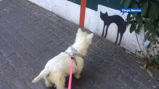 VIDEO: Dog stares at painting of cat on wall in Chile