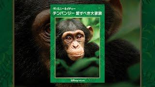 ディズニーネイチャー/チンパンジー 愛すべき大家族 (字幕版) thumbnail
