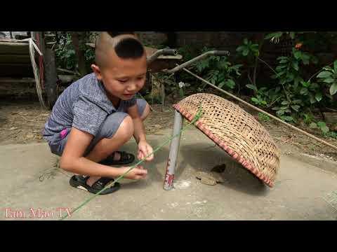 Chim Sẻ Nướng Mắm - Mao Đệ Bẫy Chim Bằng Rổ Xảo Và Cái Kết Không Thể Tin Được