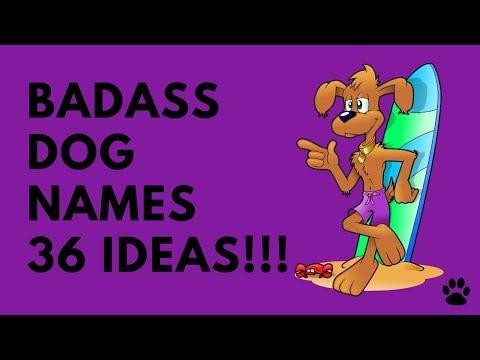 Badass Dog Names - 36 TOP & STRONG IDEAS | Names