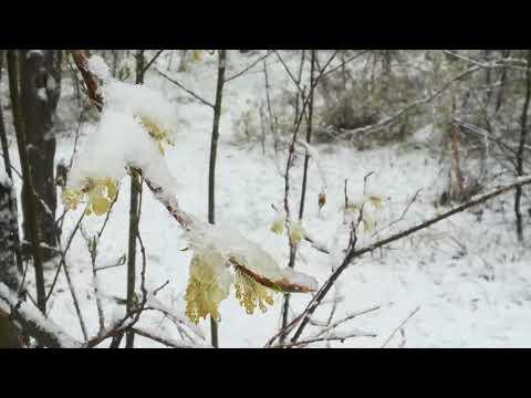 Первый майский снег в Сибири в Братске!!!!