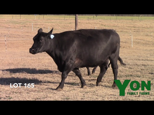 Yon Family Farms Lot 165