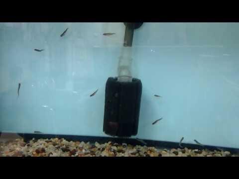 Brook trout swimming in aquarium