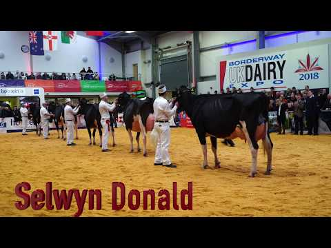 UK Dairy Expo 2018.Intermediate Holstein Championship.Riverdane Ashlyns Gold.