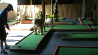How to make 18 Aces at Tiger Putt Putt / Mini Golf