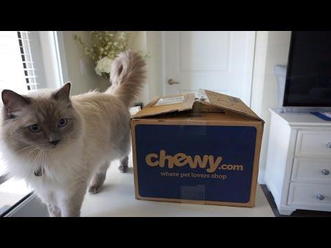 Ragdoll Cat's Mini Haul VLOG #16 March 17, 2017