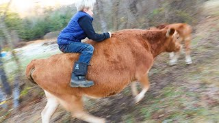 oh-no-does-this-mean-my-boy-will-be-a-bull-rider