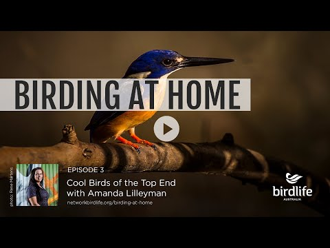 Birding At Home Episode 3: Cool Birds Of The Top End With Amanda Lilleyman
