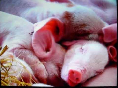 Image de b b animaux trop mignons youtube - Image bebe animaux ...