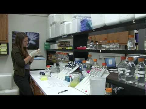 NSF Undergraduate Research Experience in Biology