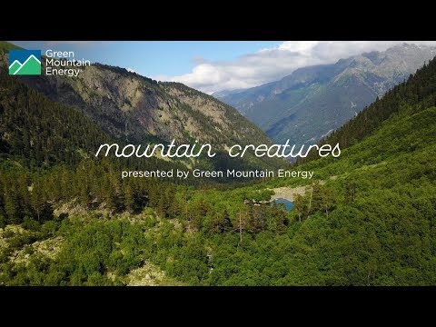 Green Mountain Energy: Mountain Creatures