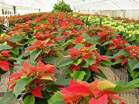 Nursery Plants - Agriculture Nurseries - Rental - Interior & Exterior  Landscaping