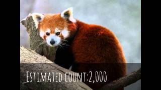 Top 29 most Endangered Animals (2012)