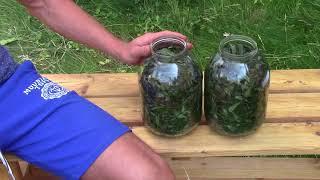 видео Как правильно сушить иван-чай (кипрей): листья, цветы, корни