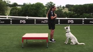 Dog Agility - Pause Table - 5 Seconds - Pro Plan P5 Training