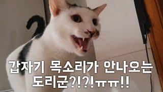 갑자기 목소리가 안나오는 도리군?!?!ㅠㅠ!! (부제 : 나몰래 언제 연기 학원 다녔니?)