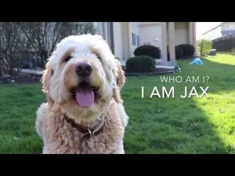 Who am I? I am Jax