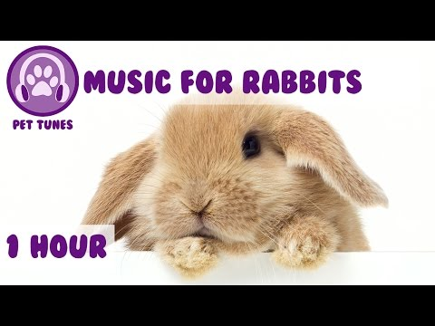 1 Hour of Bunny Music! Music to Relax Your Pet Rabbit...