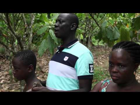 How child labor is shrinking on Ghana's cocoa farms