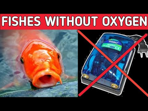 Fishes Without Oxygen Pump And Filter | Fishes That Can Live Without Air Pump And Filter .