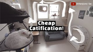 4 Ideas for Catification (Catify) on a Budget!