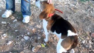 The Rescue Of 40 Laboratory Beagles: