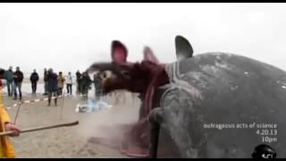 Whale Carcass Explodes on Dutch Beach