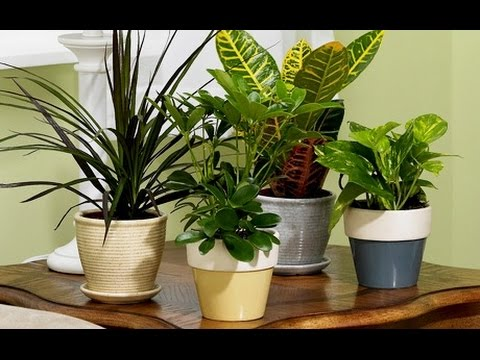 C mo cuidar y mantener las plantas de interior dr matta for Plantas de interior limpian aire