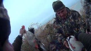 Охота на Утку и Гуся в Краснодарском крае видео