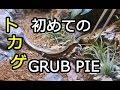 トカゲ水槽 初めてのグラブパイ(トカゲの餌) [ Lizard grub pie]