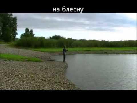 как поймать толстолобика на удочку в пруду