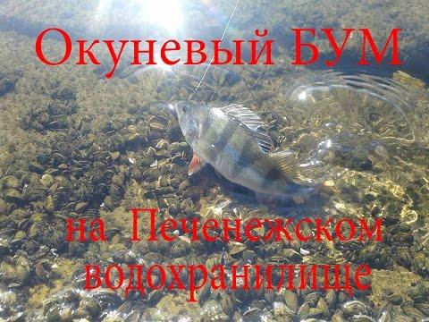Окуневый БУМ на Печенежском водохранилище/perch On A Reservoir/okoń Na Zbiorniku Wodnym