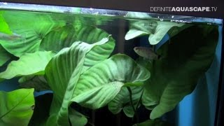 Aquarium Ideas For Beginners - Aquatics Live 2012, Pt. 10